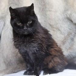 le plus vieux chat du monde