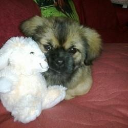 un chien et son doudou