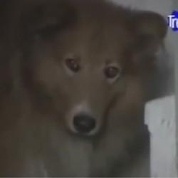 Un chien reste 9 ans sur la tombe de son maître