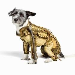 combinaison spatiale pour chien