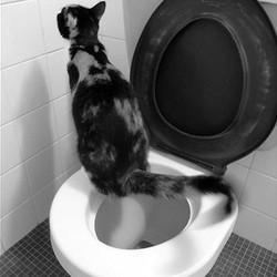 apprendre a son chat a utiliser les toilettes
