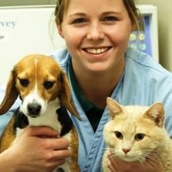 devenir assistante spécialisée veterinaire