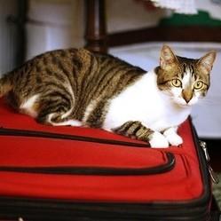 Comment ne pas perturber votre animal pendant votre déménagement ?
