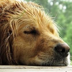 comment prendre soin pelage chien