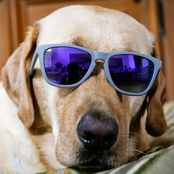 chien proteger soleil