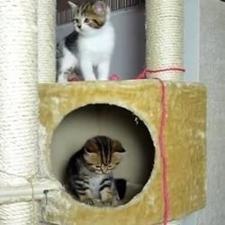 chaton chat chutes