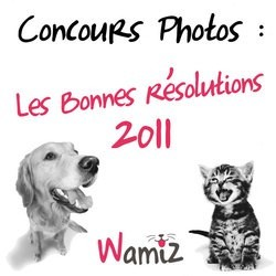concours photos chien chat