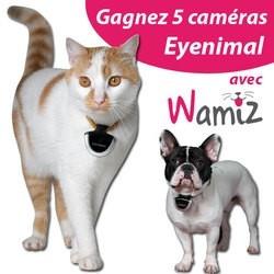 concours caméra eyenimal