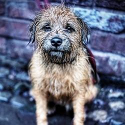 petit chien mouillé pluie