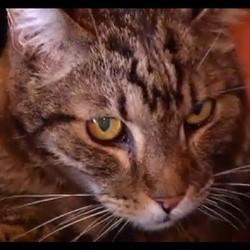 Un chat perdu retrouve sa famille 13 ans après sa disparition