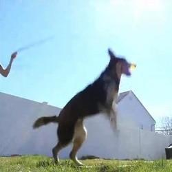 video chien corde à sauter