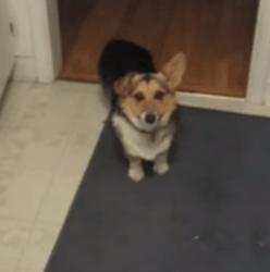 Le chien qui voulait uniquement qu'on lui parle gaiement ! (Vidéo du jour)