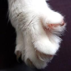 Comment couper les griffes de son animal entretenir - Comment couper les griffes de son chat ...