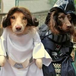 Animaux Star Wars