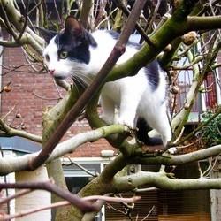 chat couvre feu sydney