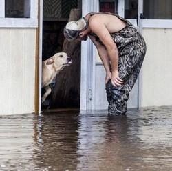 chien sauvé des innondations