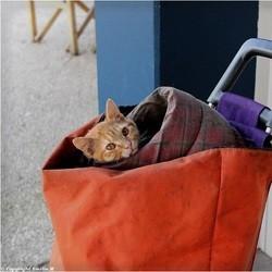 le chat d'un SDF volé