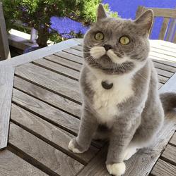 Moustache chatte