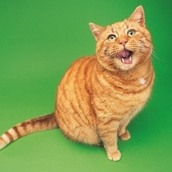 croquettes pour chat en promo