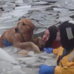 le sauvetage d'un chien tombé dans l'eau glacé
