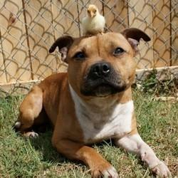 chien pâques poussin lapin