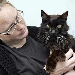 un chat perdu retrouvé 13 ans ap^rès sa disparition