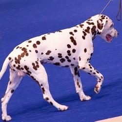 chien de race lof confirmation
