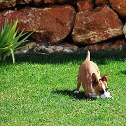 dangers ete chien chat jardin