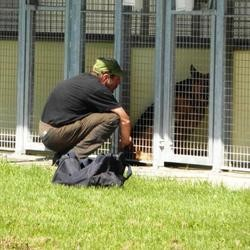 daniel sdf chien euthanasie fourrière