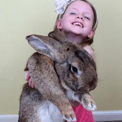 Un lapin hors normes - Le plus gros porte conteneur de chez maersk ...