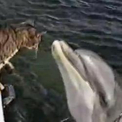 Chat et dauphin amis