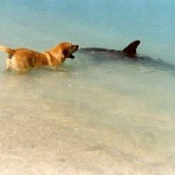 dauphins sauvent chien floride