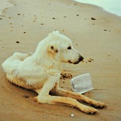 chien errant sur la plage