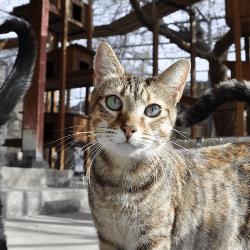 chats sauvés par DELTA Rescue
