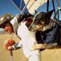 Shadow chien qui vole en deltaplane