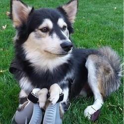 chien prothèses 3d