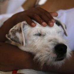 A l'hôpital de Quito, des chiens redonnent le sourire à des enfants malades