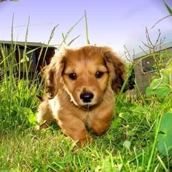 desherbant chien bio