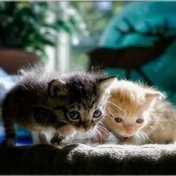Deux chatons abandonnés, sauvés d'une décharge