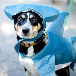 chien déguisement halloween