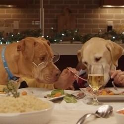 chiens noël