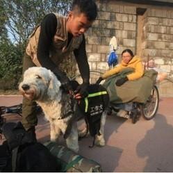 un chien tire un fauteuil roulant