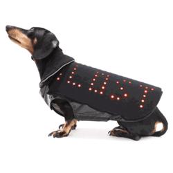 manteau pour chien à LEDs