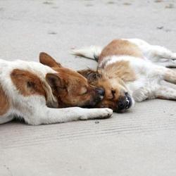 un chien veille sur le cadavre de sa compagne