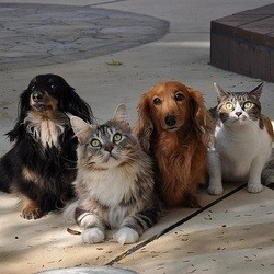 Dog and Cats !