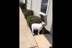 Un chien et sa boîte