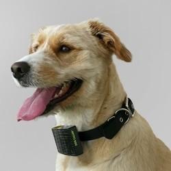 Dog Caller, un collier qui vous alerte par SMS quand votre chien a trop chaud