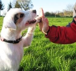 dog dancing la france a un inccroyable talent