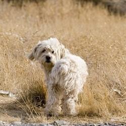un chien errant dans un champ
