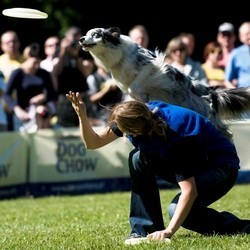 dog frisbee sport canin